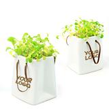 Ceremic Flower Pot