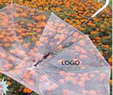 Transparent Umbrellas